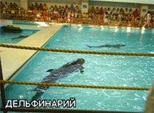 В Геленджикском дельфинарии. Фото.