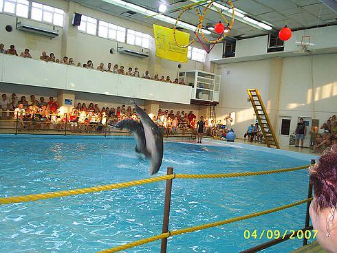 Представление в Геленджикском дельфинарии.