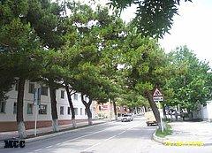 Улица Горького в Геленджике